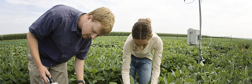 Picture of researchers in soybeans