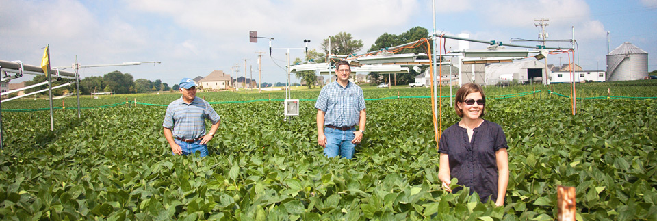 Fourth soybean image